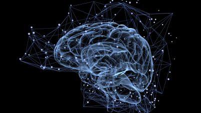 Brain Brain activité cerveau