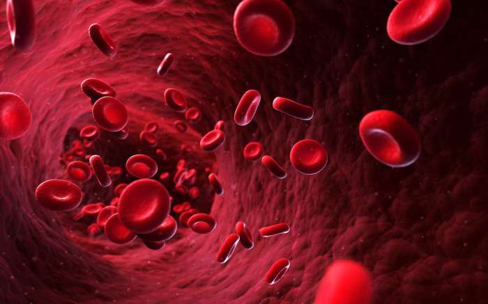 globules-rouges-sang