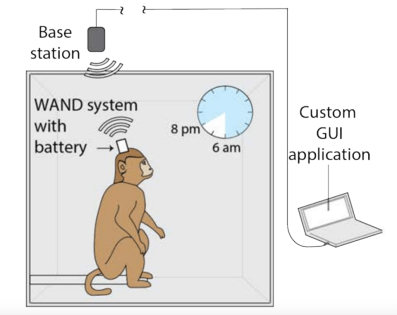 Placed on top of the monkey's head, the wireless, palm-sized Wand device connected directly to its brain and could record, stimulate, and modify its behavior in real time.