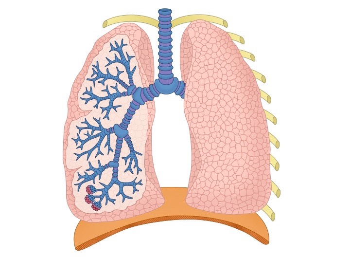 human respiratory system diagram unlabeled 1915 ford model t wiring lung structure | bioninja