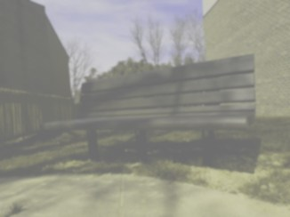 Bench, dog view