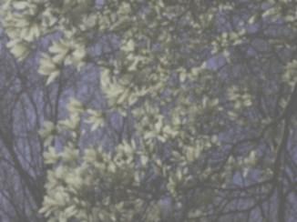 Magnolia, dog view