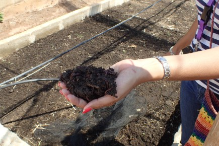 Earthworms used in vermicomposting