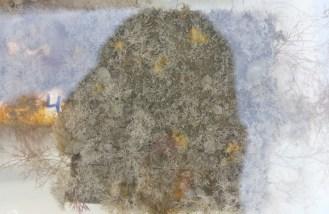 Molgula manhattensis, Bugula neritina