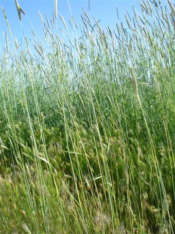 jordan-grass (Small)