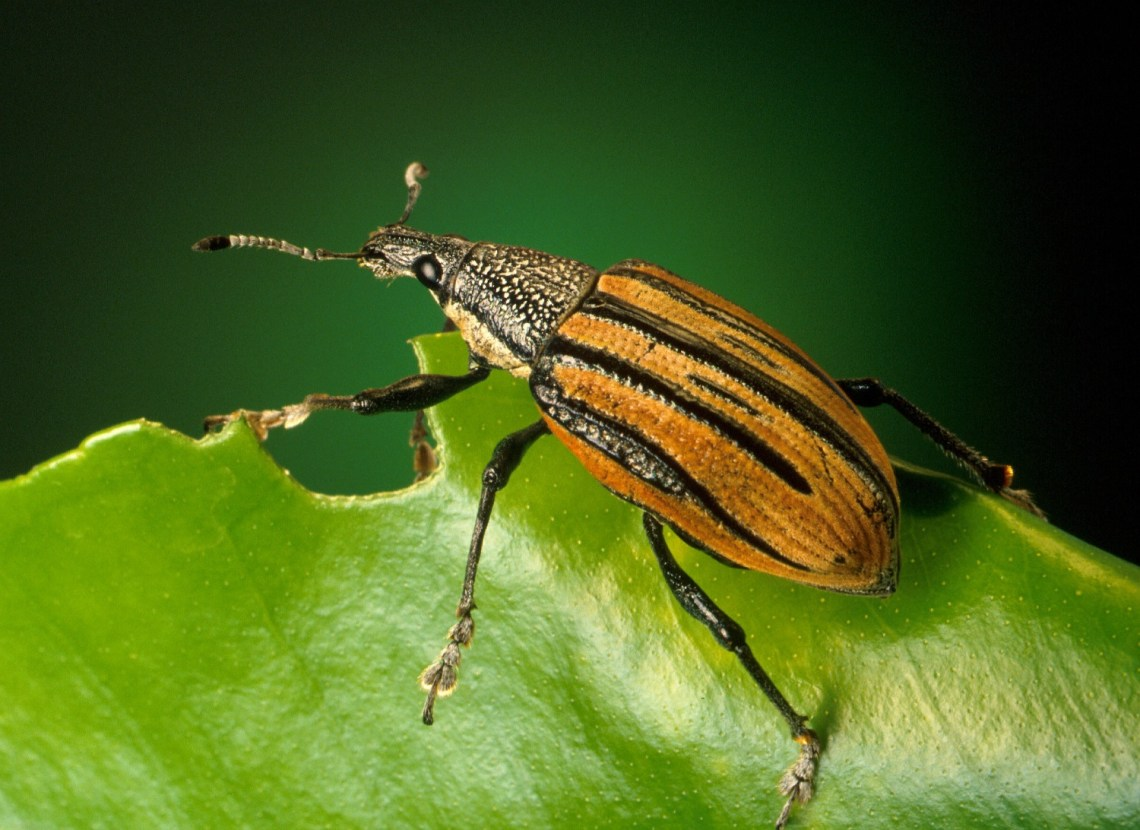 Kill The Bugs & Pull the Weeds: The Loss of Discernment
