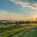 Carlton Coon - The Science of Shepherding