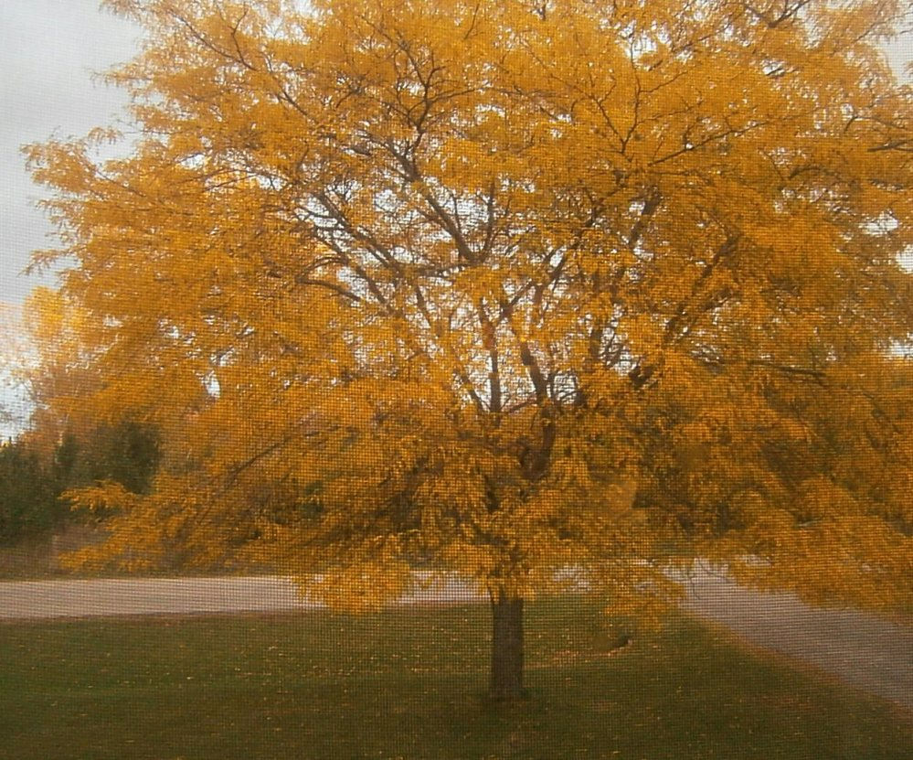Fall Pictures in WI- 2015 (4/4)