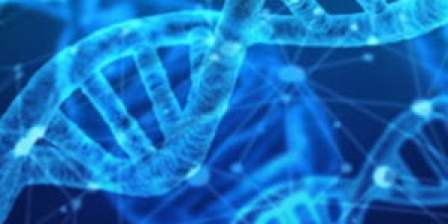 stress link to genes