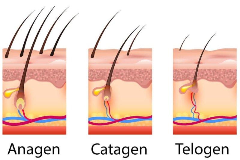 hair-loss-phase