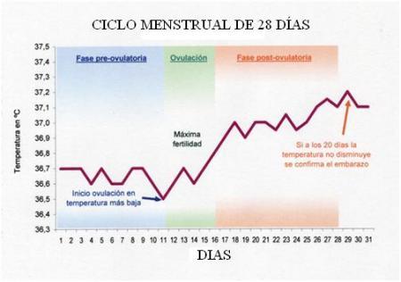 Gráfico como se mira la evolución de la temperatura