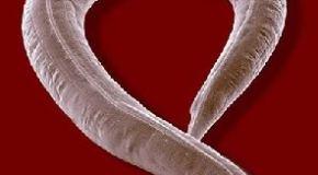 El ayuno prolongado puede mejorar la capacidad de fertilidad en humanos?