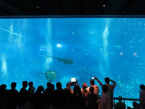The amazing deep ocean aquarium