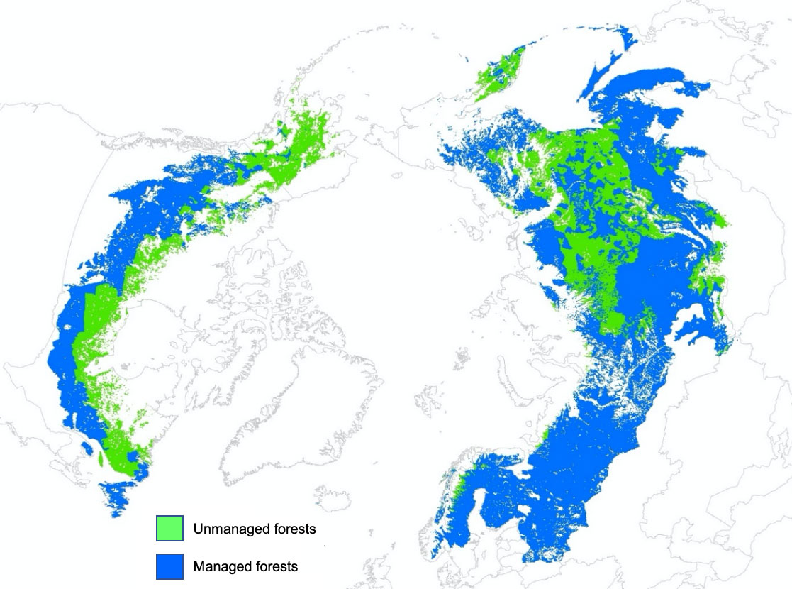 The boreal forest is a particularly challenging environment, and so biodiversity here is comparatively low but superbly adapted. About Boreal Forests Ibfra