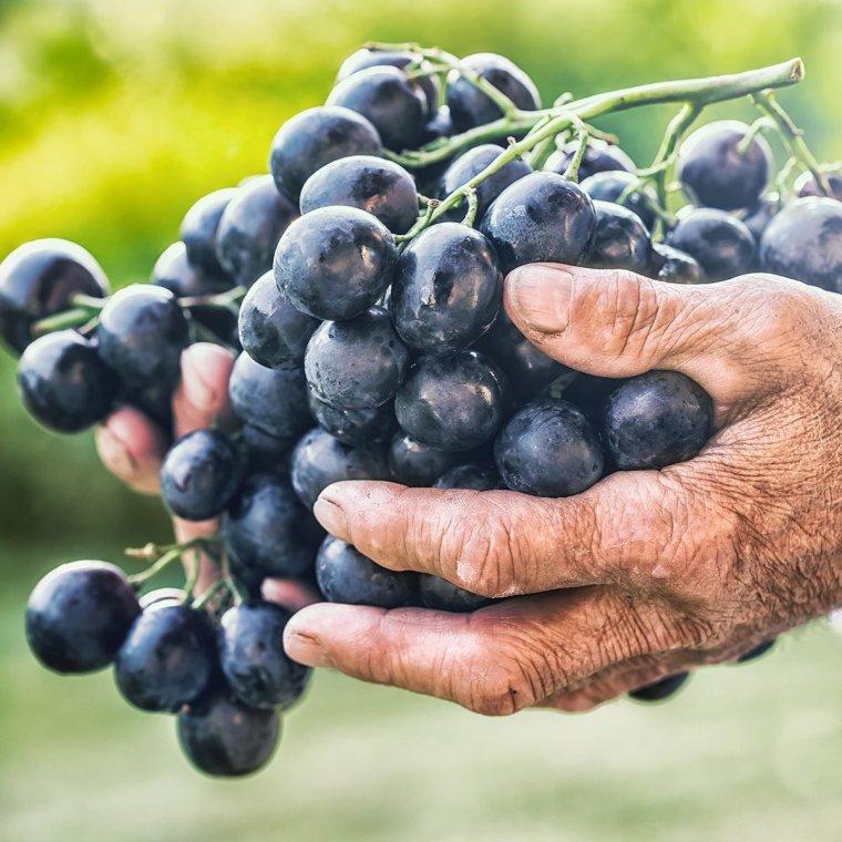 فوائد العنب الأسود للحمل