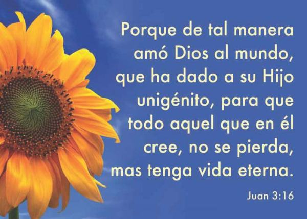 Spanish-sunflower-John-316[1]