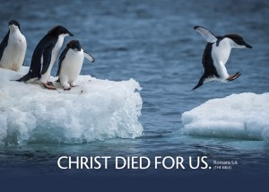 Romans58_5x7 Text 2019 Penguins