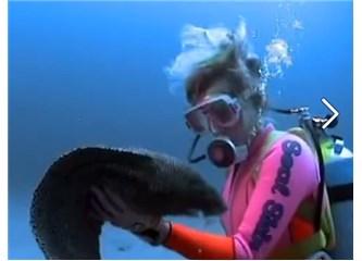 Bir müren balığı böyle sevgi gösterebilir mi? Video