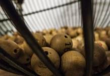 Recomendaciones loteria navidad
