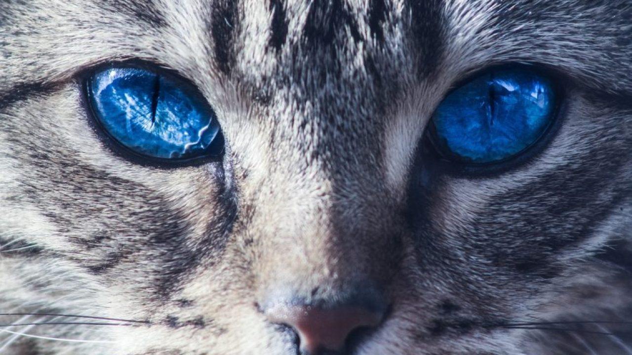Kucing Hutan 7 Jenis Cara Menjinakan Kucing Hutan Ada Gambar