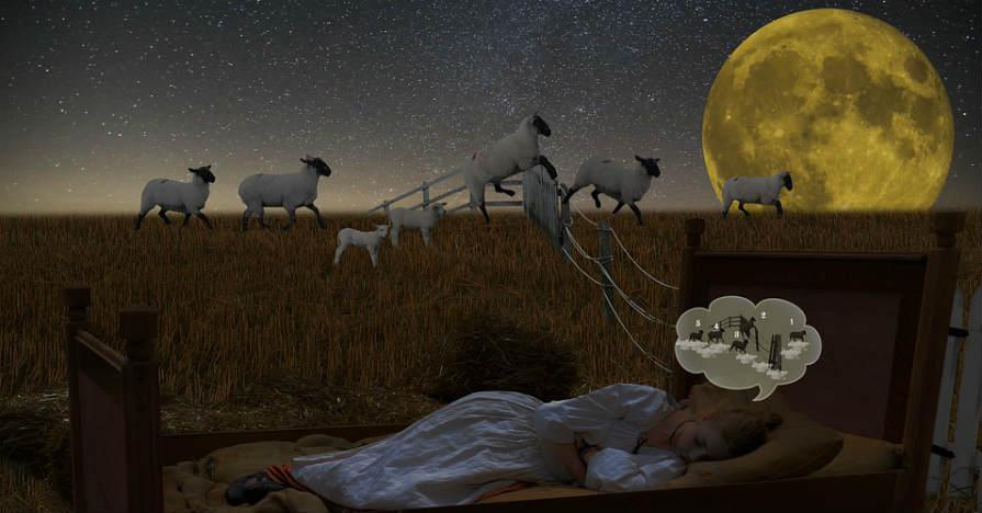 分割睡眠と仮眠を行う筆者が考える『眠気』と『睡眠』の正体とは