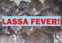 Image result for Bayelsa State records suspected case of Lassa Fever