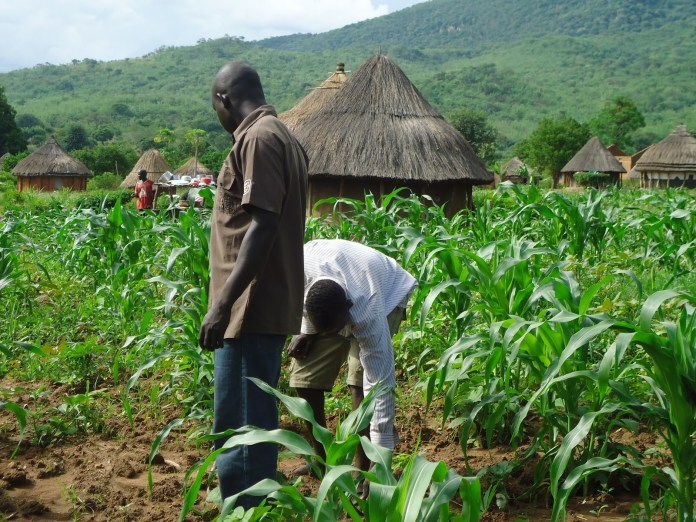 Climate Change: Why Nigeria must depend less on rain-fed agriculture - Farmer