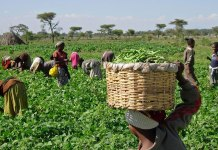 Regulate organic Agriculture to avoid adulteration – Experts