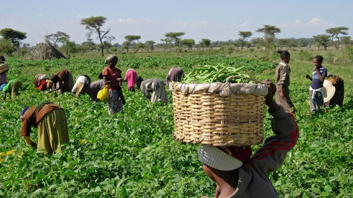 Kano Govt. concessions 1,000 hectres of lands for fodder production