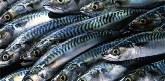 Nigeria lose N400bn yearly on fr fish imports—Lawmaker