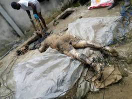 Police uncovers septic tank filled with 20 corpses in Rivers State