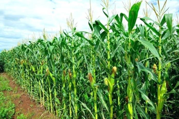 Government commits N1bn into fertilizer production