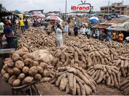 Yam Business: Leveraging from Nigeria's underground economy