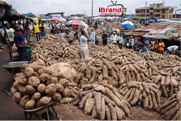 Food security: FG distributes 50,000 yam seeds to farmers in Ekiti