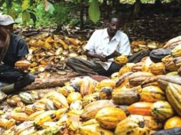 'Cocoa farmers only earn about 6% of the chocolate industry's total revenues'