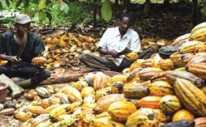 Cocoa trade near 52-week at $2,603 per metric ton