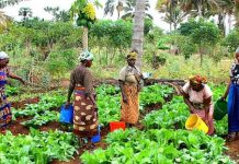 Africa's agric sector, ready solution to economic challenges if harnessed - AATF