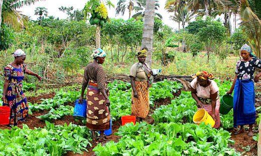 Women Farmers: Utilising sustainable practices to enhance productivity of smallholder