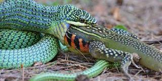 Nigeria needs N7bn for domestic production of Anti-Snake Venom — Expert