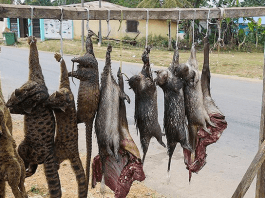 Bushmeat consumption can endanger wildlife preservation - WildAid