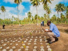 FG pushes for more investment in coconut industry in Nigeria