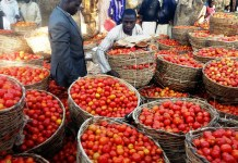 Prices of tomato skyrockets by 50% across major markets in Nigeria