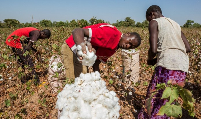 Cotton Production: Ogun set to create 14,000 new jobs, acquires 4,500 hectares of land