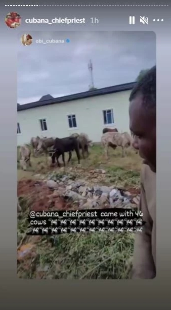 Cubana Chief Priest Gifts Former Boss 46 Cows For Mum's Burial