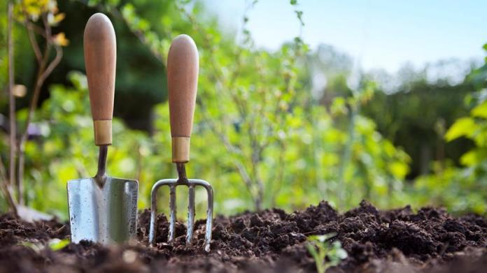Horticulture: Nigeria loosing millions over negligence of sector