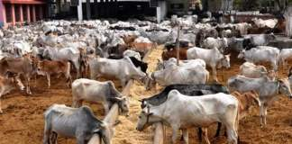 Cost implications of anti-open grazing laws implementation in Nigeria