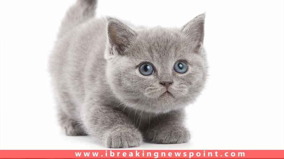 top ten adorable cats