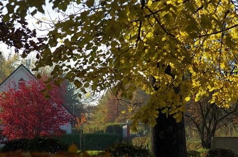 Herbstauswahl_06