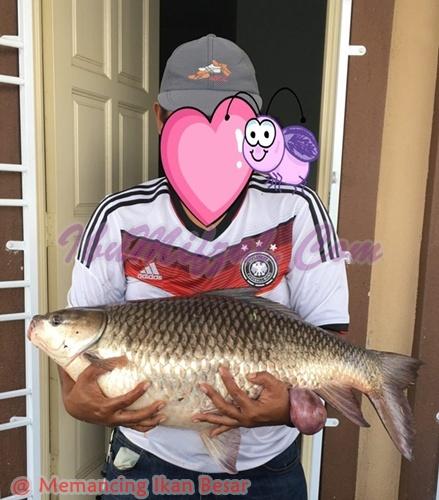 memancing ikan besar