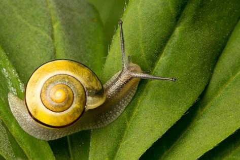 A beautiful snail